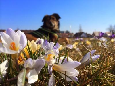 Hund und Blumen hundeblog canistecture dogblog