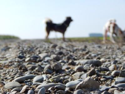 Hund_steine