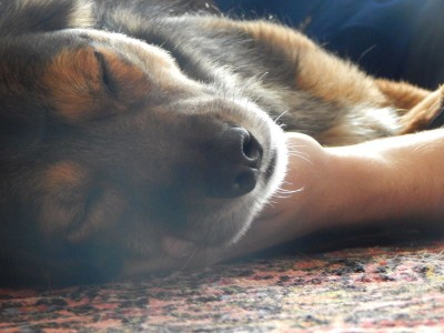 Lemmy-Herrchen-Hundeblog-Canistecture-Dogblog