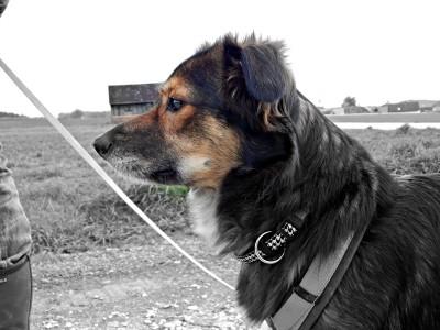 Dog_Lemmy (2)