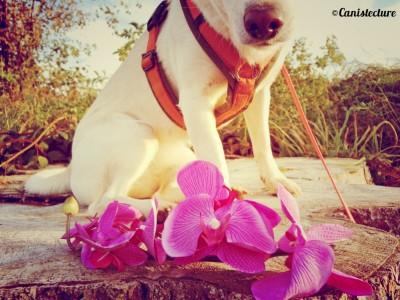 Dog_flower4