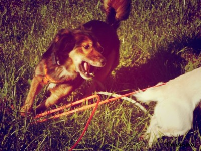 Dog_play (2)
