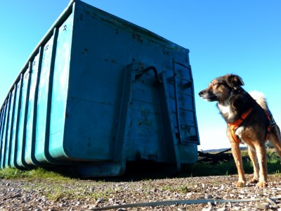 Hund_Container-dogblog-hundeblog-canistecture