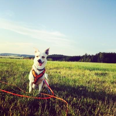 Iggy-verrückt-hundeblog-canistecture-dogblog