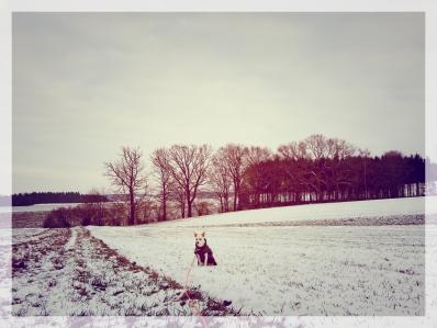 Iggy_Schnee