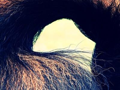 Lemmy-schwanz-hundeblog-canistecture-dogblog