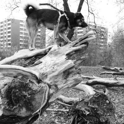 Lemmy-stamm-oben
