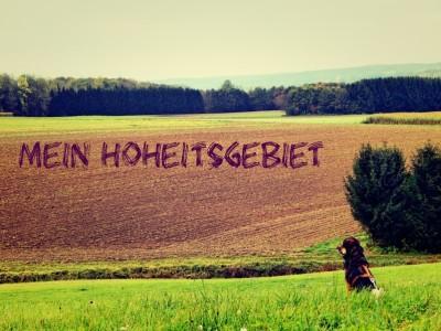 Lemmy_Gassi2-dogblog-hundeblog-canistecture