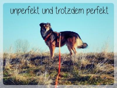Lemmy_perfekt