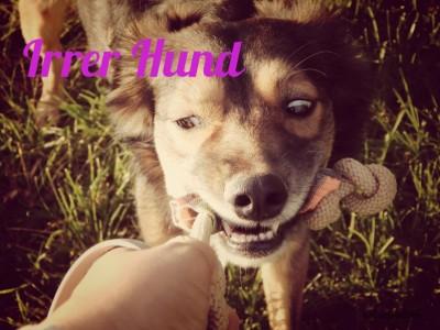 crazy_dog