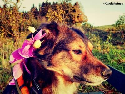 dog_flower-hundeblog-canistecture-dogblog