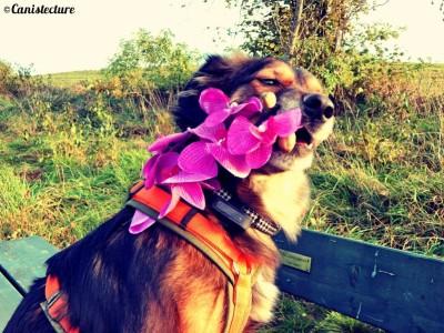 dog_flower2
