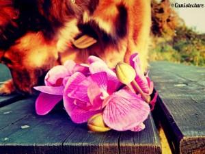 dog_flower3