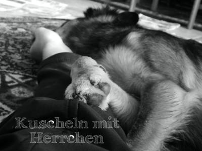 canistecture-hundeblog-lemmy-herrchen-kuscheln