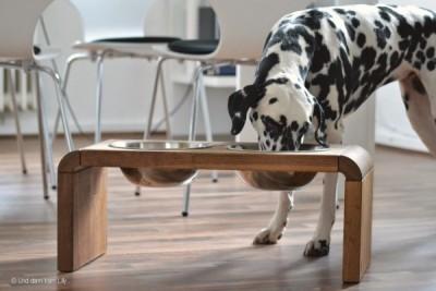 interview wohnen mit hund teil 2 hundeblog canistecture. Black Bedroom Furniture Sets. Home Design Ideas