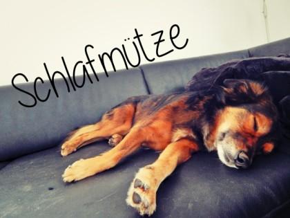 schlafmuetze-hundeblog-canistecture-dogblog