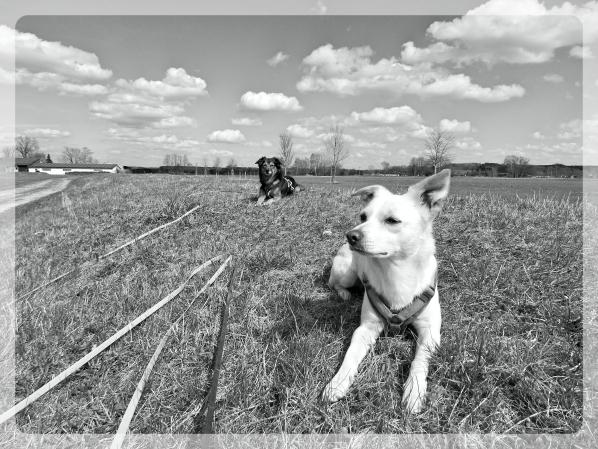 Hundeblog_Canistecture das Rudel