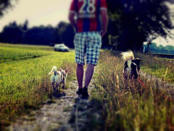 Team-hundeblog-canistecture-dogblog