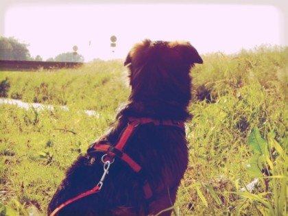 lemmy-sommer-mindel-hundeblog-canistecture-dogblog