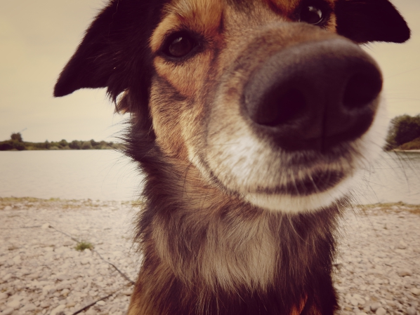 -hundeblog-canistecture-dogblog-lemmy-nase-schnauze