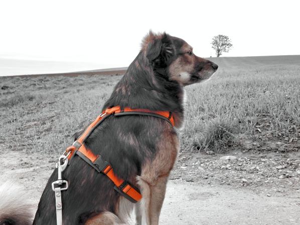 lemmy-feld-bw-hundeblog-canistecture-dogblog