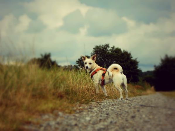 hundeblog-canistecture-iggy-feld-blick