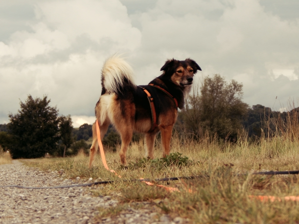 hundeblog-canistecture-lemmy-feld-2