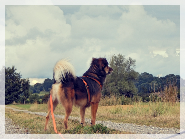 Bauch-Kopf-Leben-hundeblog-canistecture-lemmy-feld