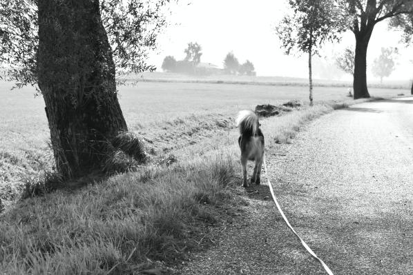 lemmy-weg-fluss-hundeblog-canistecture-dogblog