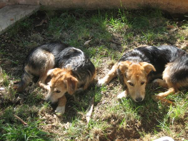 Amor kommt auf Hundepfoten - Bonny-Baldo