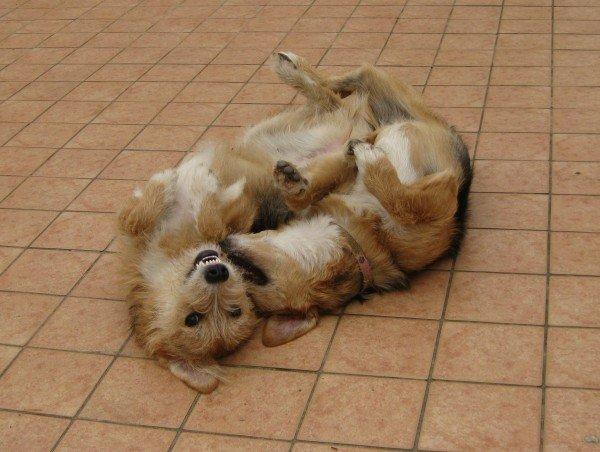 Amor kommt auf Hundepfoten - Die ganz große Liebe