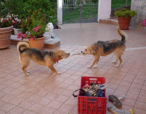 Amor kommt auf Hundepfoten - Lappenspiel