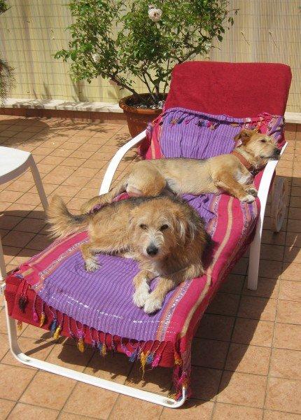 Amor kommt auf Hundepfoten - Sonnenbad-1 (2)