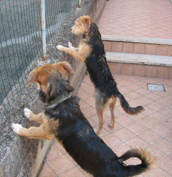 Amor kommt auf Hundepfoten - gleich kommt der Postbote