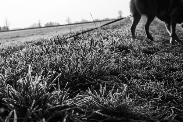 Lemmy-gefrorenes-Gras
