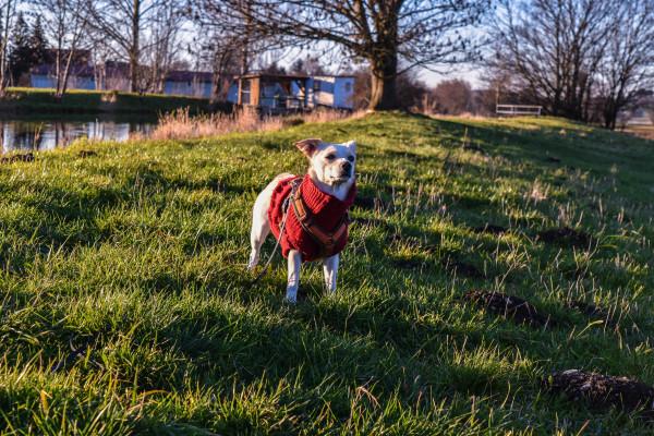 Canistecture - Hund - Angst - Hundeblog