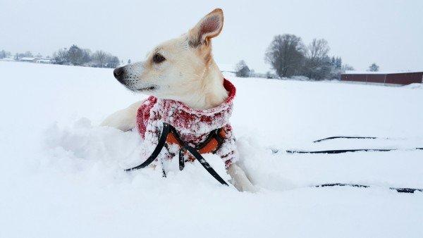 Hund im Schnee in Bayern - Hundeblog Canistecture