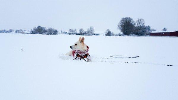 Hund im Schnee in Bayern - Hundeblog Canistecture - Samsung Galaxy S 6 Edge +