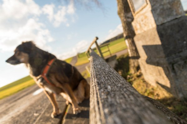 Hundeblog Canistecture Hund