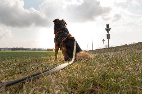Die verbotene Kommunikation der Hunde