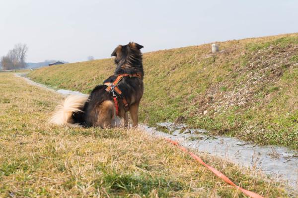 Hundeblog Canistecture - aggressiver Hund