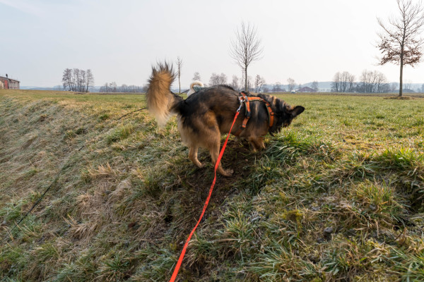 Hundeblog Canistecture Hund beim Buddeln