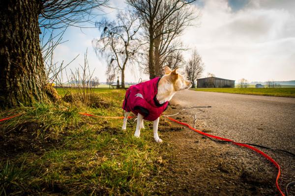 Hundeblog Canistecture Glück