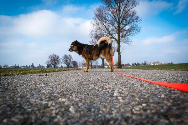 Hund mit Arthrose, Hundeblog