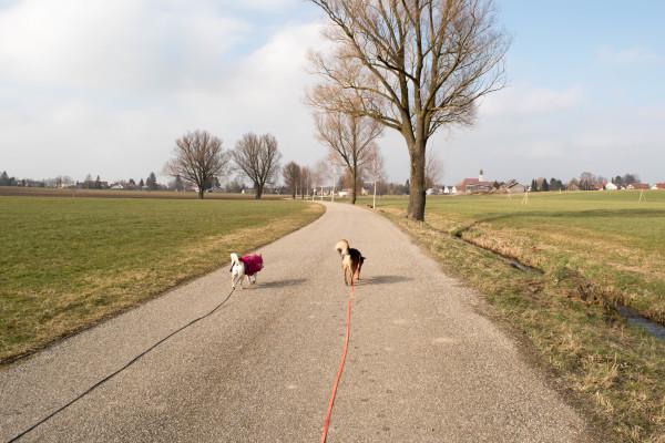 Hundeblog Canistecture Gassi gehen mit Hund