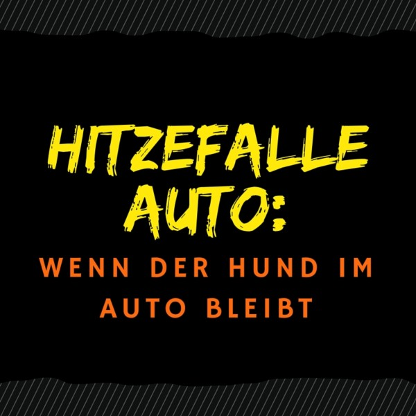 Hitzefalle Auto: Wenn der Hund im Auto bleibt - Hundeblog Canistecture Hund im Auto