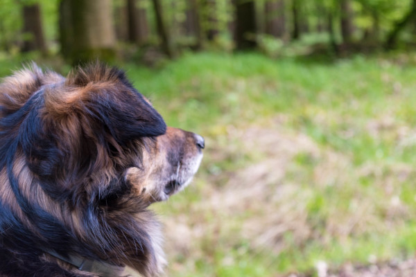 Hund im Wald Canistecture