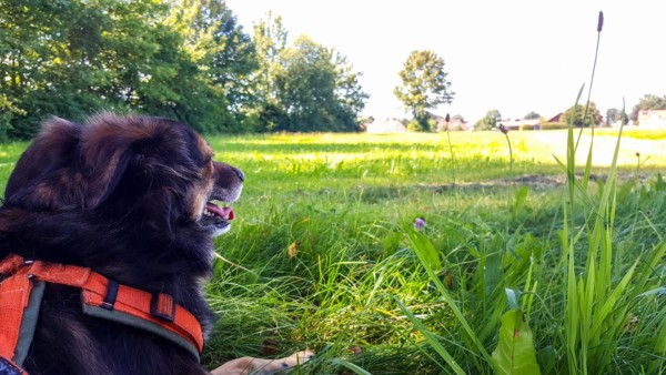 Hund Hundeblog Canistecture