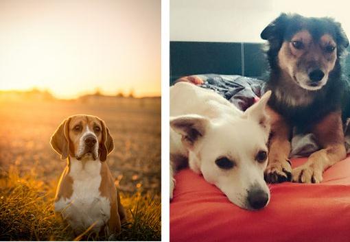 2016-09-27-20_05_31-hundeblogger-domino-beagle-timmy-der-hundeblog