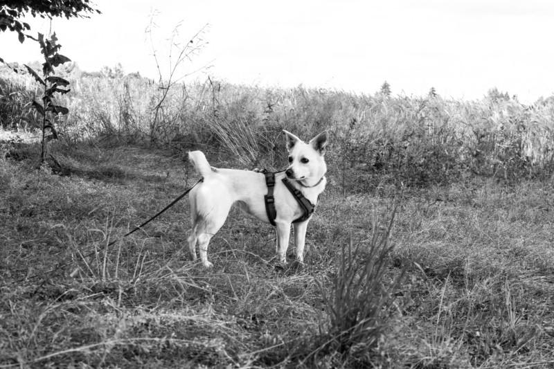 Tierschutzhund hundeblog-canistecture_-2